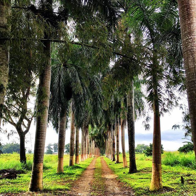 Rhum de la Jamaïque et de la Barbade